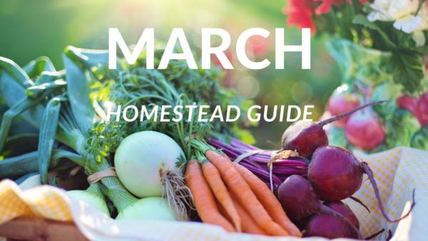 homestead guide